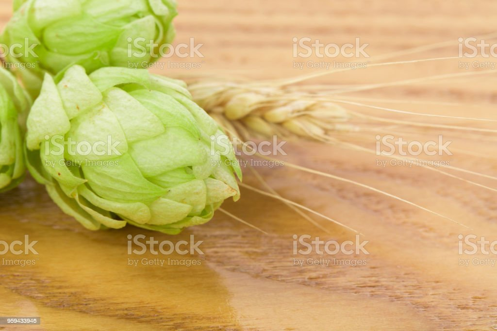 Beautiful hop and a spica. stock photo
