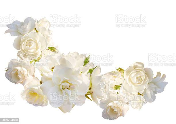 Beautiful horizontal frame with bouquet of roses isolated on white picture id469764504?b=1&k=6&m=469764504&s=612x612&h=k3eh2ke0zuk os80 0msgahcfhvud  z3siza4to5f4=