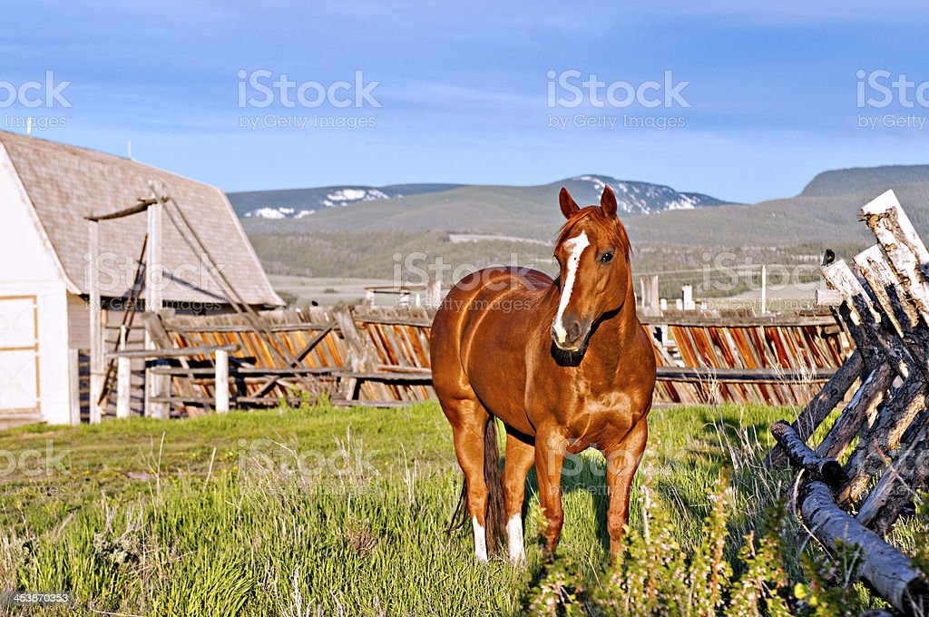 Beautiful Horse at Montana Ranch stock photo