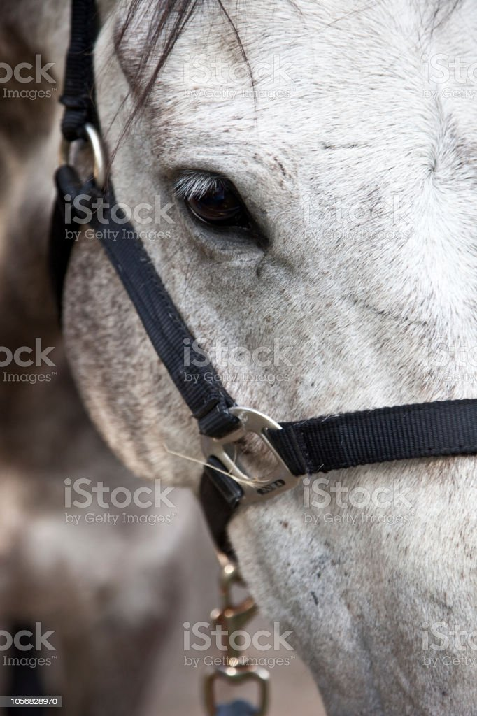 Beautiful Horse Elegantly Waiting In Stables Stock Photo Download Image Now Istock