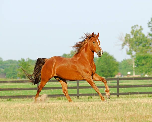 Beautiful horse enjoying a morning run in the paddock  stock photo