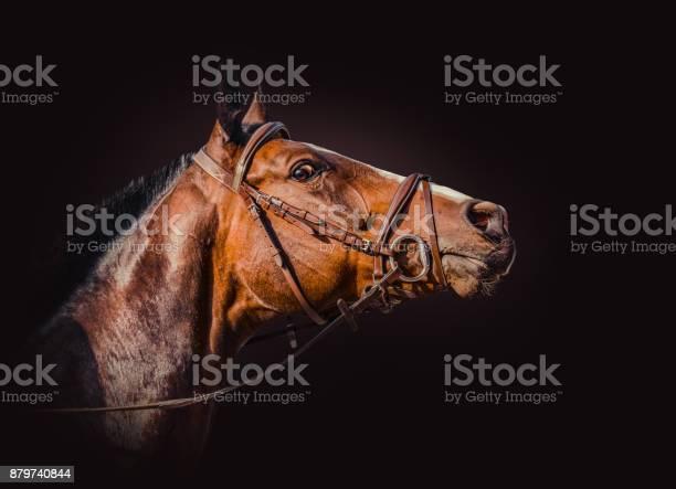Photo of Beautiful horse head isolated on dark background.