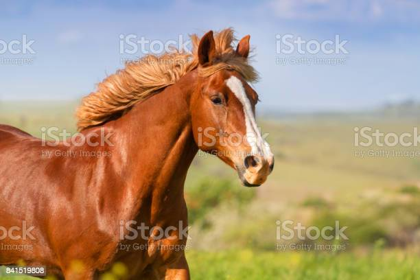 Beautiful horse in motion picture id841519808?b=1&k=6&m=841519808&s=612x612&h=n81fpcmimfjyljbrj9ucd7jmuj1a5ouymyuixeyuxec=