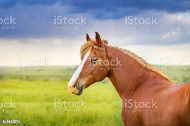 Beautiful horse in motion picture id843612074?b=1&k=6&m=843612074&s=612x612&h=oimj8qbfetrqjliq8hqenze7qbalyabxxisxzeiy be=