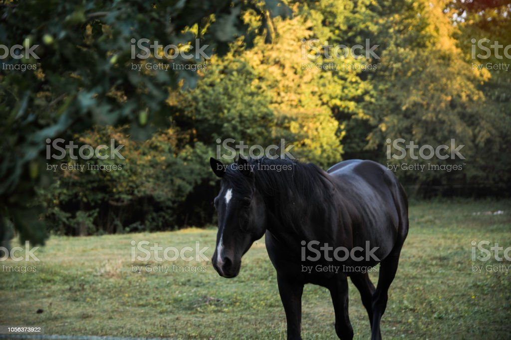 Beautiful Horse In Nature Stock Photo Download Image Now Istock