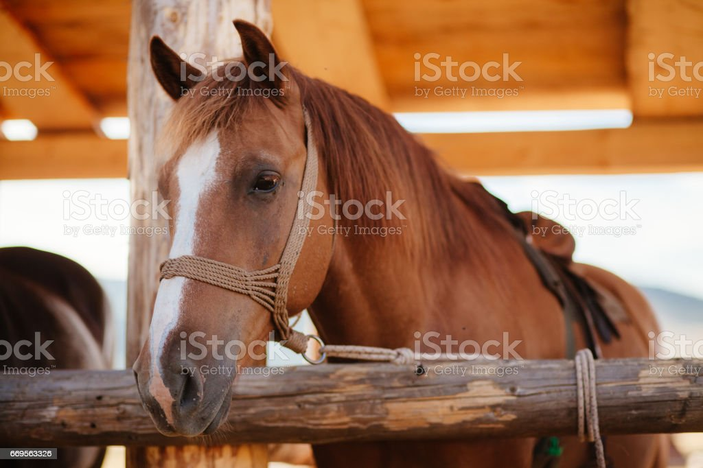 beautiful horse in stall stock photo