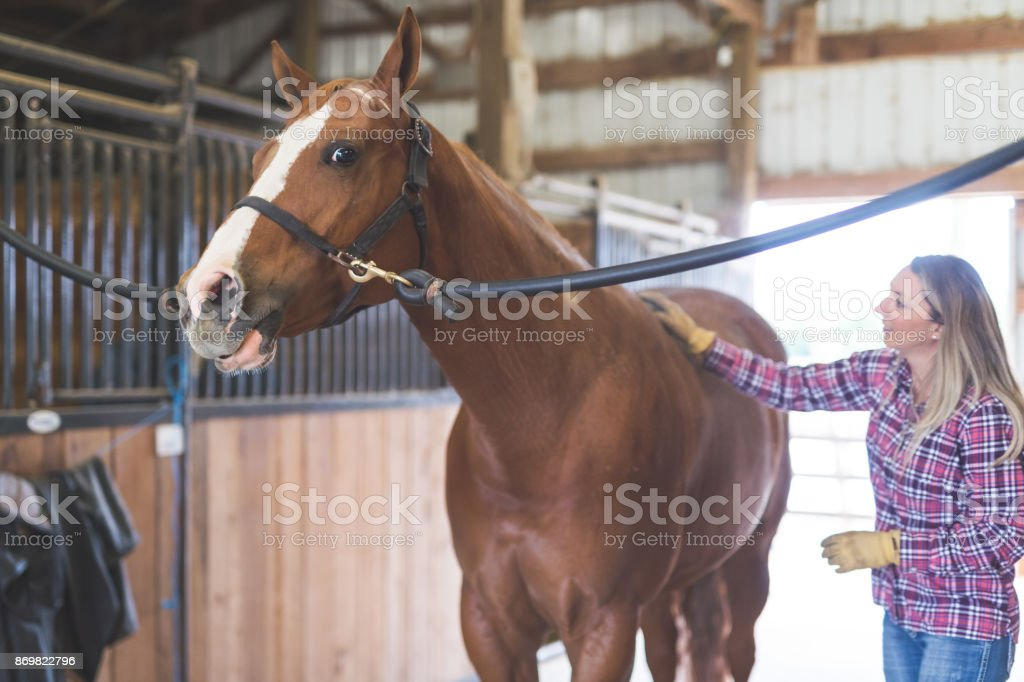 Beautiful horse in the country stock photo