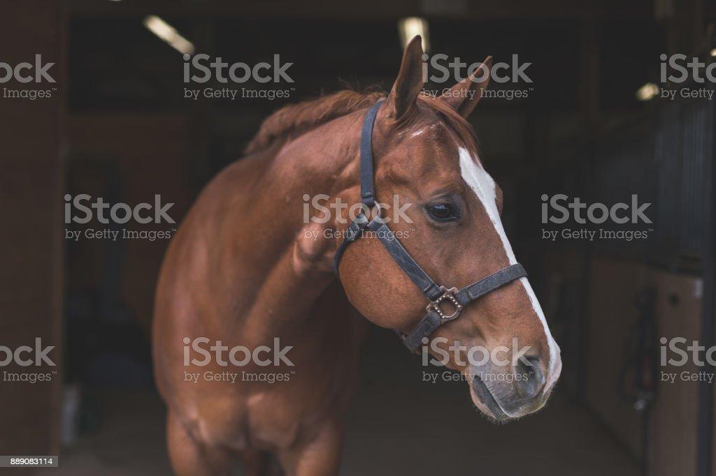 在該國匹漂亮的馬 - 免版稅一個人圖庫照片