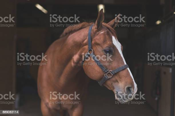 Photo of Beautiful horse in the country