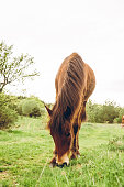 Beautiful, brown horse in the meadow.