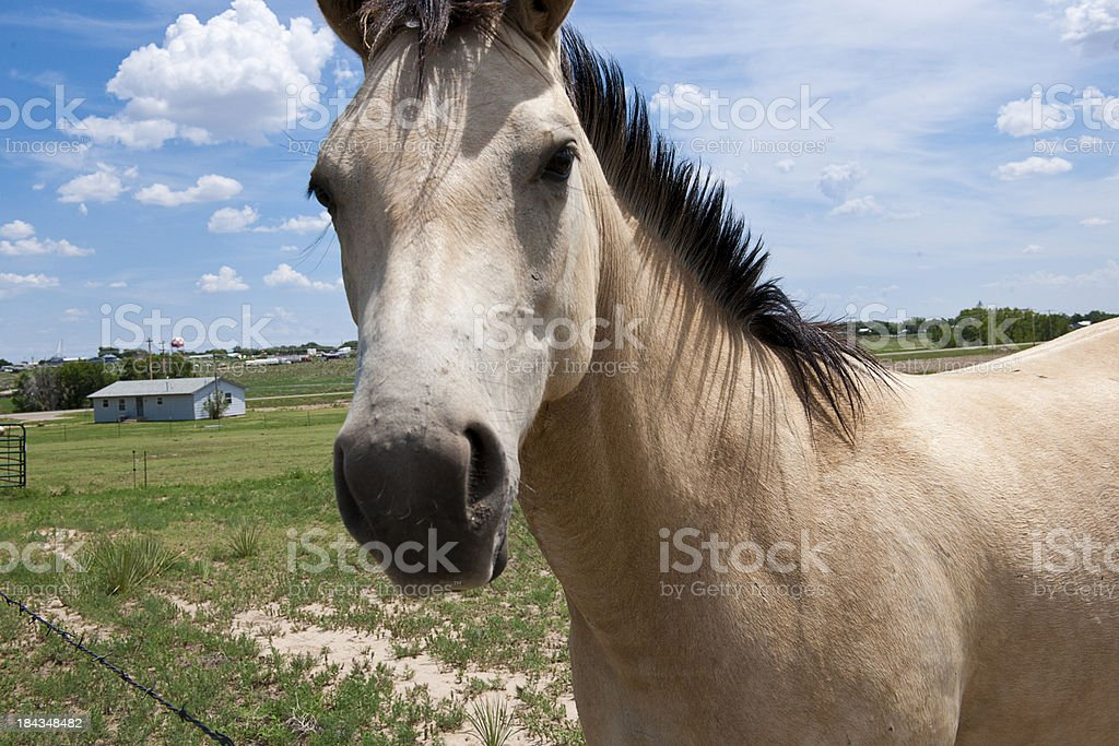 Beautiful Horse Looking At You Stock Photo Download Image Now Istock