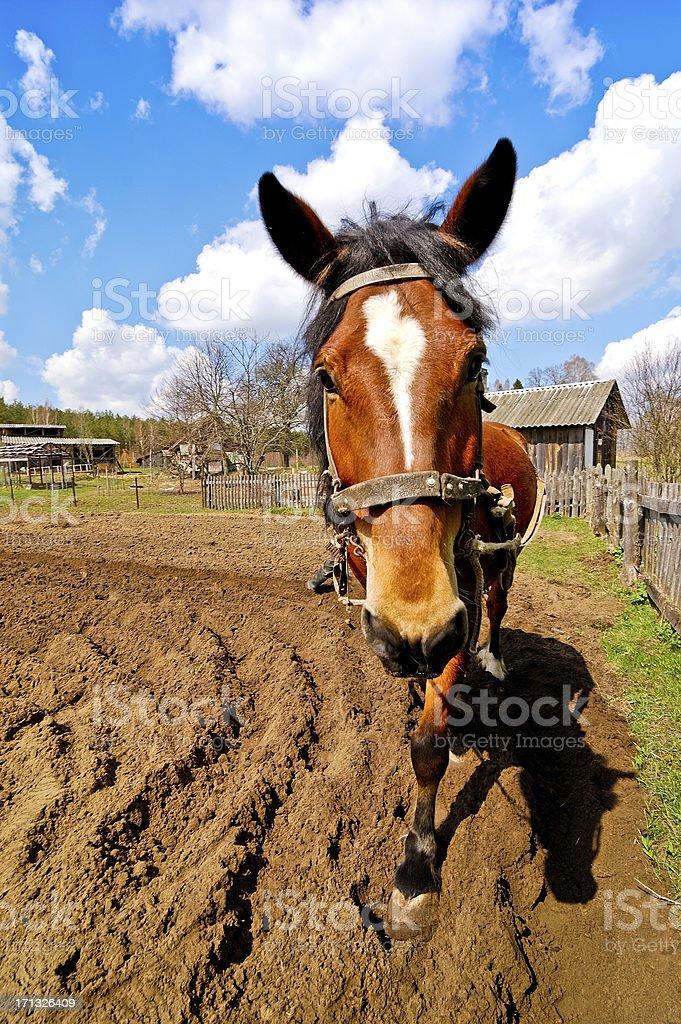 Beautiful horse stock photo