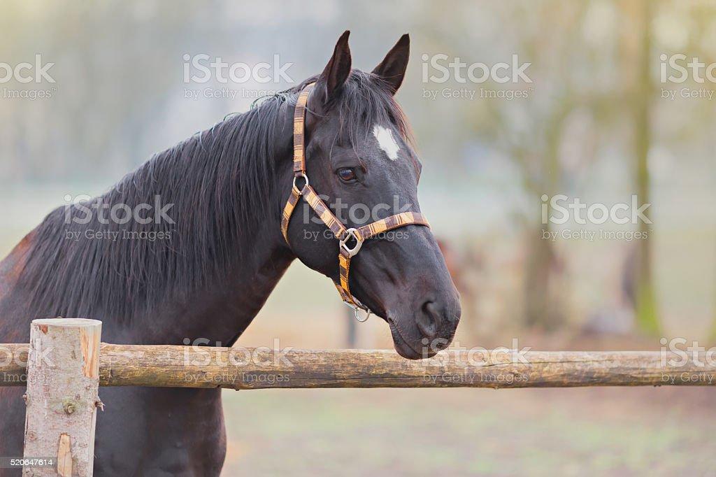 beautiful horse portrait stock photo
