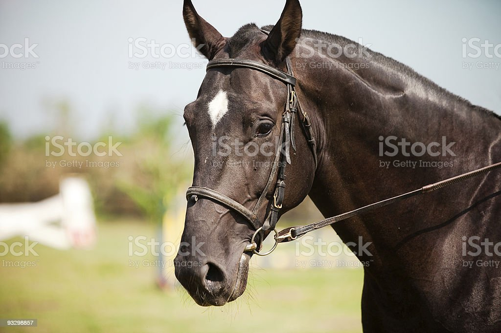 Beautiful horse portrait royalty-free stock photo