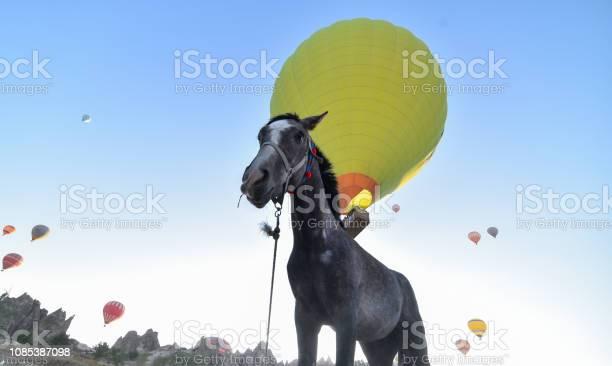 Beautiful horses country cappadocia picture id1085387098?b=1&k=6&m=1085387098&s=612x612&h=hpaj q0 lkzepz5uqpnb9s03mzsqsvvqot54cexpy0g=