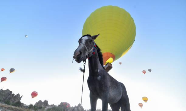 Beautiful horses country cappadocia picture id1085387098?b=1&k=6&m=1085387098&s=612x612&w=0&h=wjjpukmibwomqzak47n 4 9af7akqh7ilslqlqqor c=
