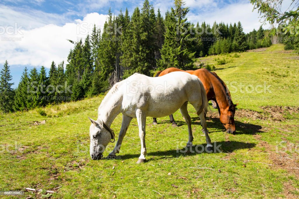 Beautiful Horses Grazing Outdoor On Green Hill Nature Countryside Scenery Beautiful Animals Stock Photo Download Image Now Istock