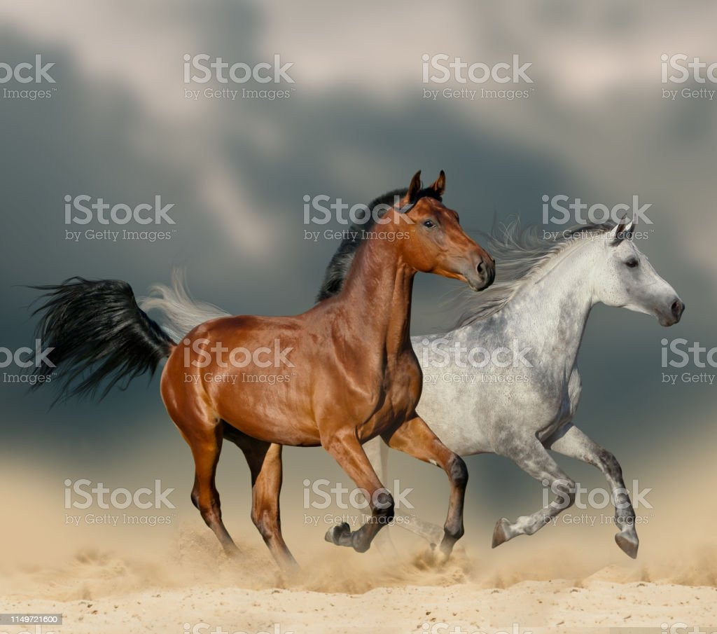 Beautiful Horses In Desert Stock Photo Download Image Now Istock