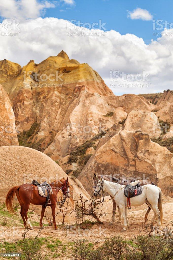 30 schöne bilder pferde  besten bilder von ausmalbilder