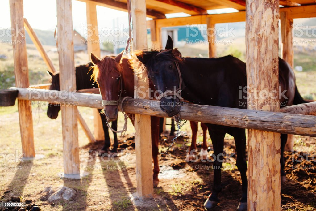 beautiful horses in stall stock photo