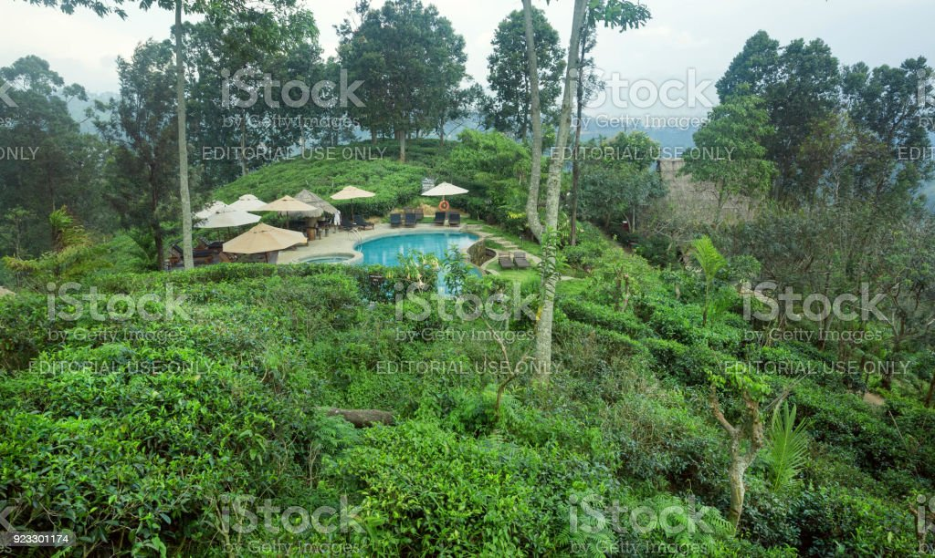 Beautiful hotel swimming pool surrounded by forest and green tea...