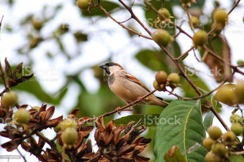 Beautiful House Sparrow Bird In Wild Nature Stock Photo Download Image Now Istock