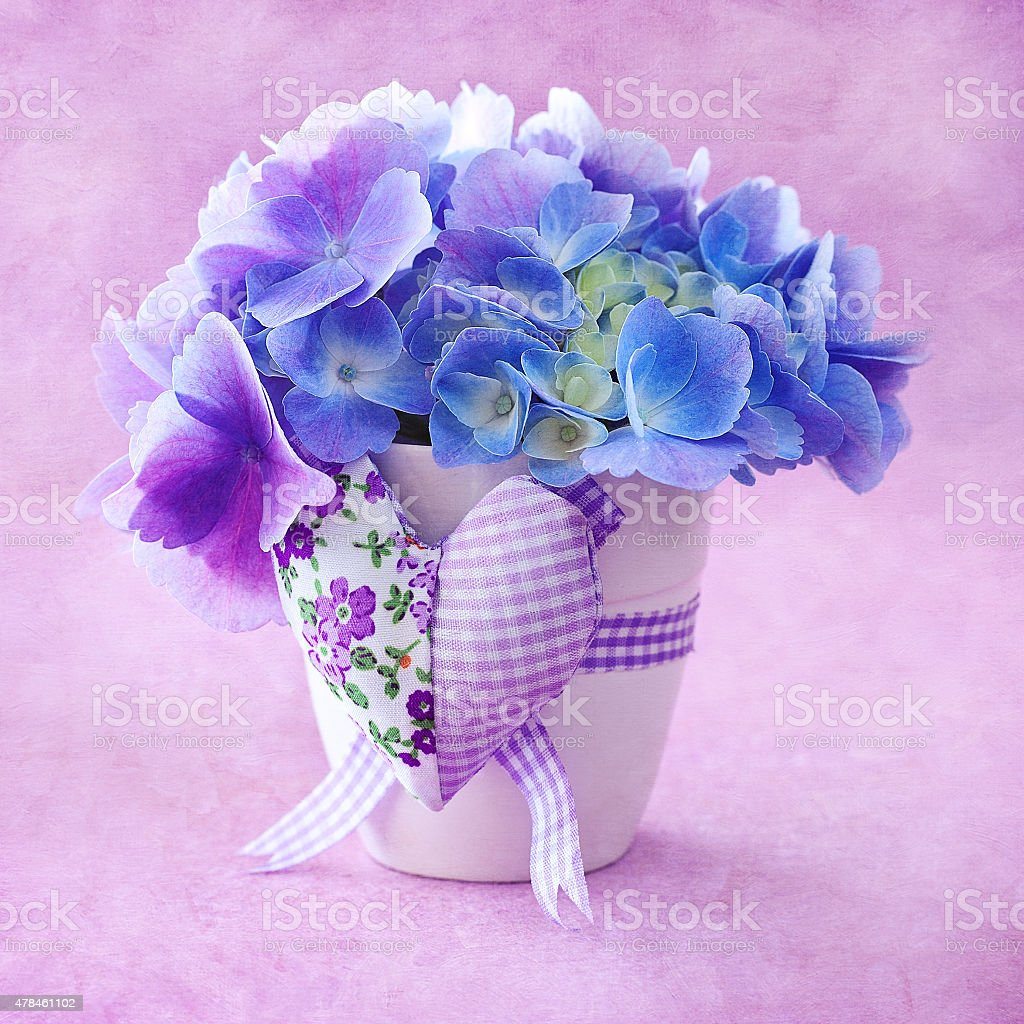 Wunderschöne Hortensie Blumen Lizenzfreies stock-foto