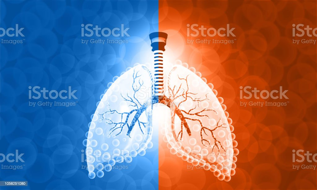 Beautiful image of Human Lung anatomy stock photo