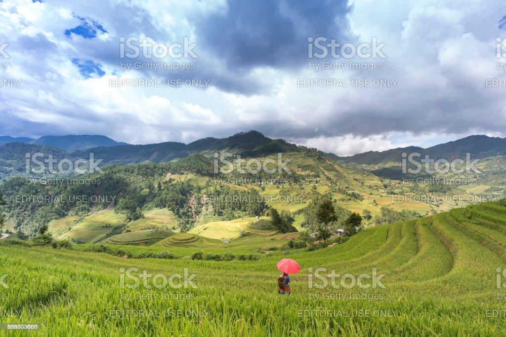 Bellas Imágenes De Cultivos En Terrazas En La Montaña Del