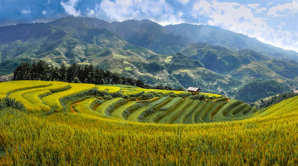 Beautiful images of terraced fields in the northwest mountain of Vietnam Beautiful images of terraced fields in the northwest mountain of Vietnam indochina stock pictures, royalty-free photos & images