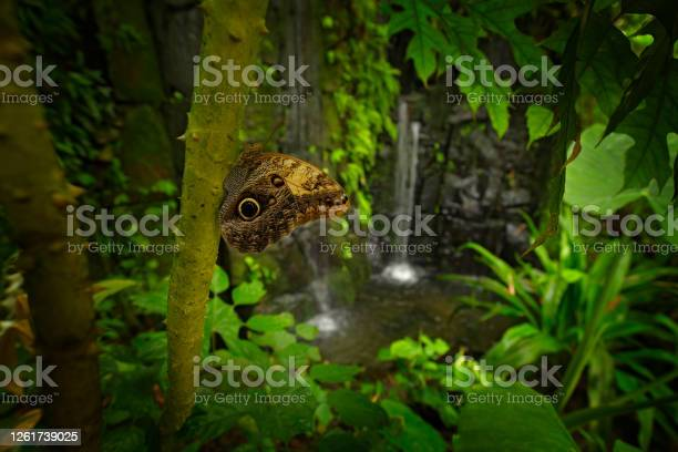 Photo of Beautiful insect in tropicc jungle forest.