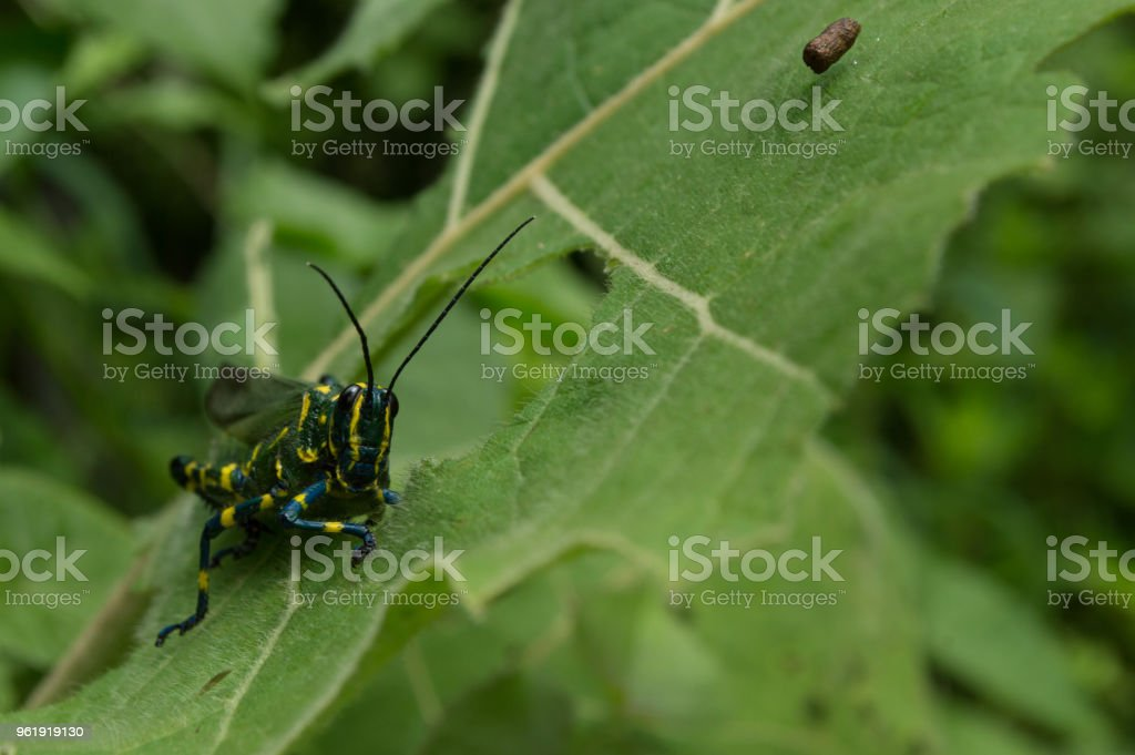 beautiful insect stock photo