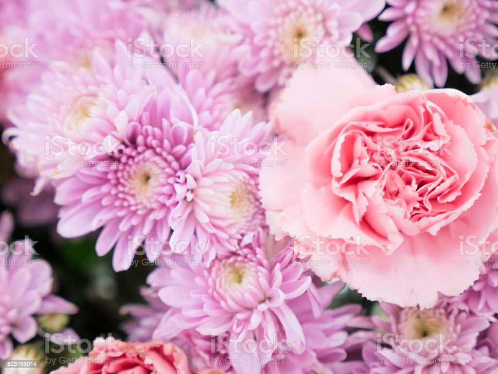 Beautiful Integrity Elegance Pink Pastel Color Flowers Stock Photo