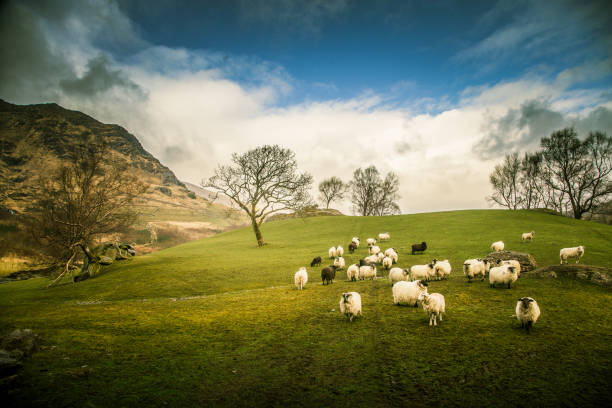 A beautiful irish mountain landscape in spring with sheep. Gleninchaquin park in Ireland. stock photo