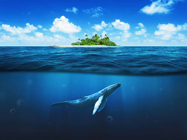 beautiful island with palm trees. whale underwater - ocean under water stockfoto's en -beelden