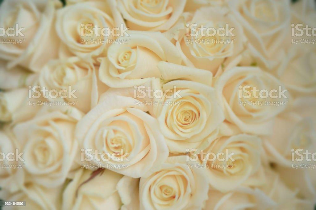 Close-up de rosas grandes marfil hermoso tiro, arreglo floral para bodas y celebraciones - foto de stock