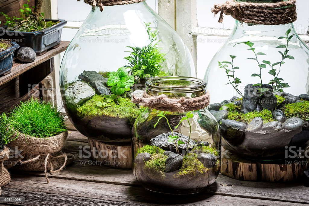 Beautiful jar with live forest with self ecosystem stock photo
