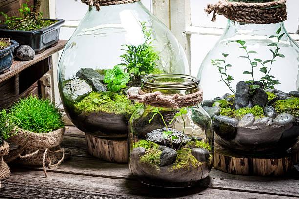 beautiful jar with live forest with self ecosystem - terrarienpflanzen stock-fotos und bilder