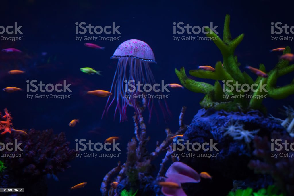 Beautiful jellyfish close up stock photo