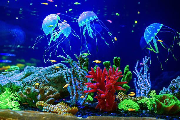 beautiful jellyfish medusa in aquarium - wirbellose tiere stock-fotos und bilder