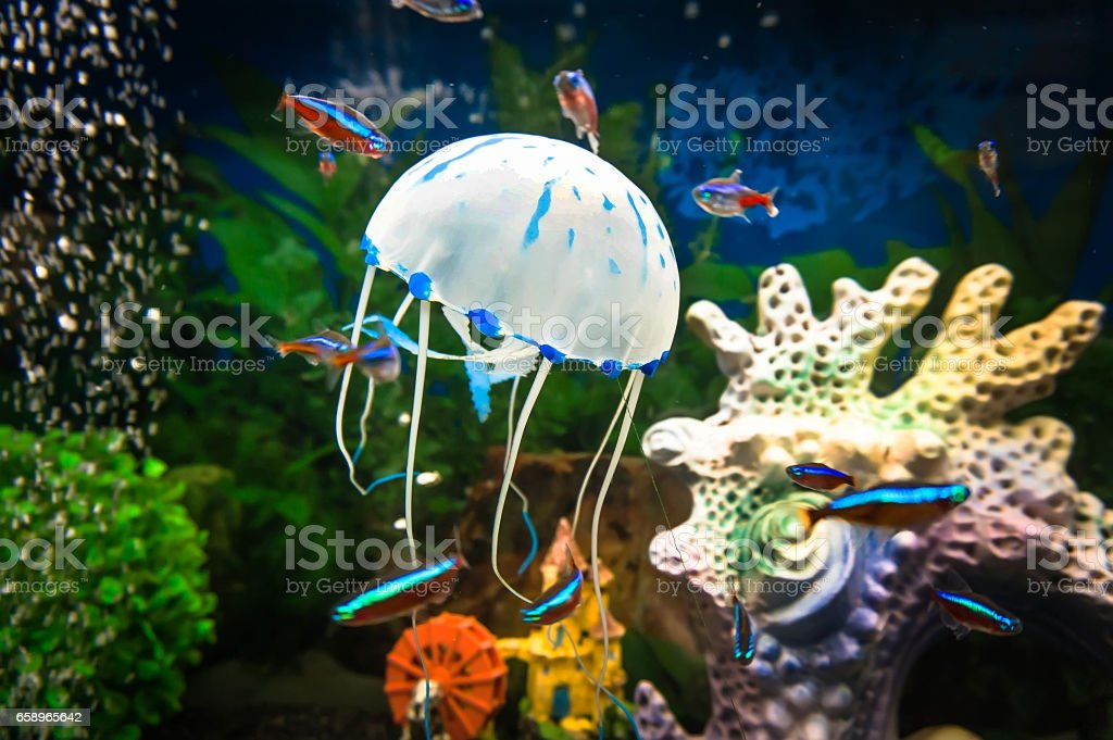 Beautiful jellyfish, medusa in the neon light with the fishes. stock photo