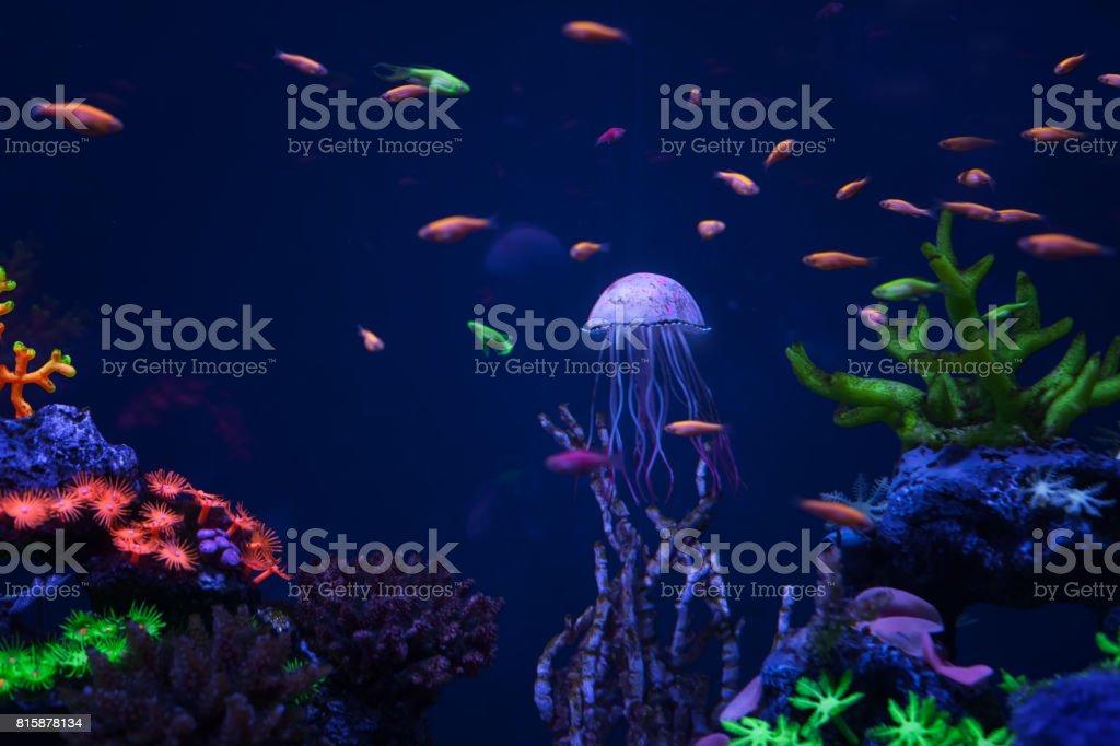 Beautiful jellyfish under water stock photo