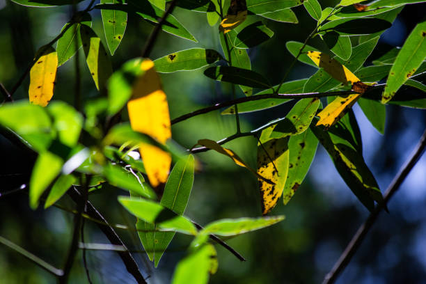 Beautiful Juxtaposition of Color in the Woods (2) stock photo