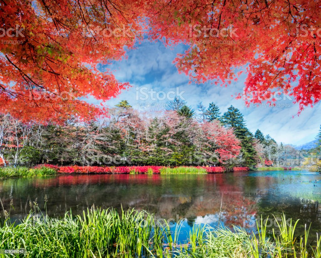 beautiful karuizawa during the fall season, Japan stock photo