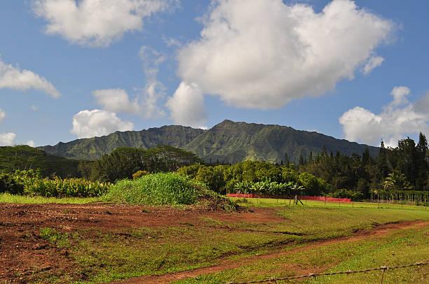 Beautiful Kauai  neicebird stock pictures, royalty-free photos & images