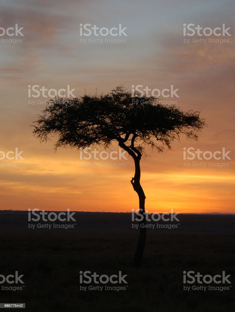 Beautiful Kenya Sunset royalty-free stock photo