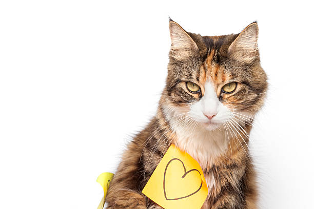 Beautiful kitten and yellow post-it with drawn heart Beautiful kitten and yellow post-it with drawn heart kitten cute valentines day domestic cat stock pictures, royalty-free photos & images