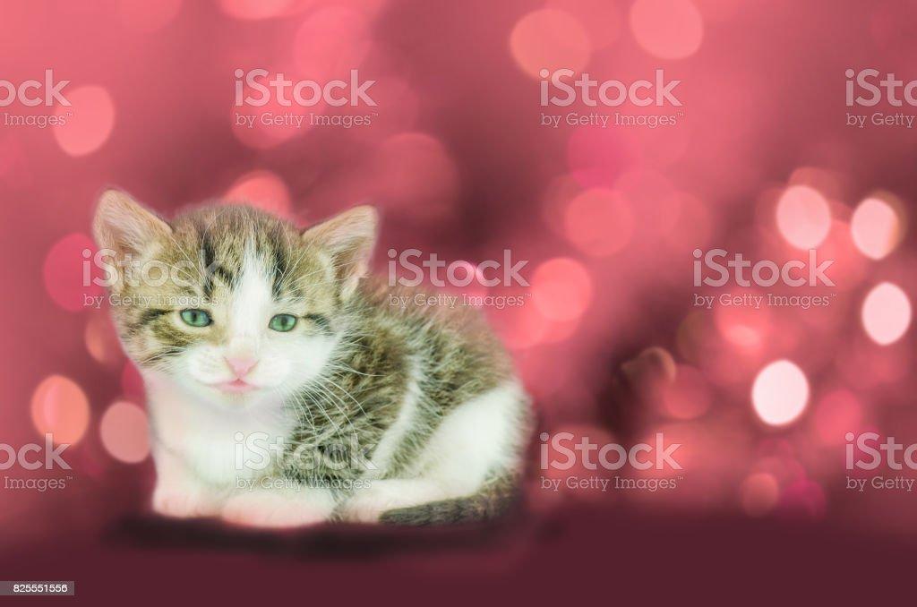 Beautiful kitten on red stock photo