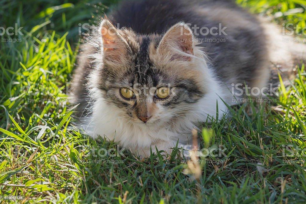 beautiful kitten stock photo