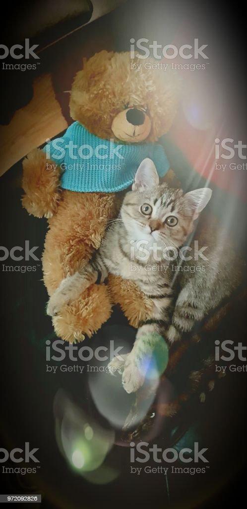 Beautiful kitten стоковое фото